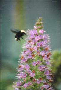 Flying Bumblebee