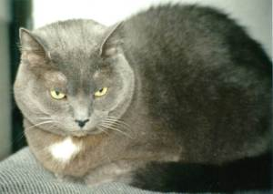 barney gray with yellow eyes
