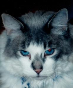 gorgeous blue eyes