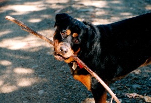 Carl with Stick