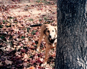 Carmel Behind Tree