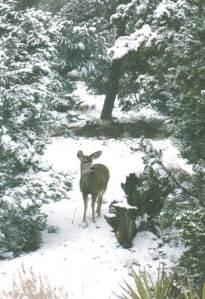 Deer in Winter Snow