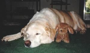 Murphy loved his stuffed animals