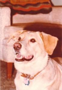 Murphy, The Best Dog Ever