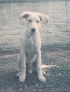 Murphy as puppy, 1975