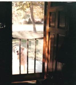 "Murphy:  ""Let me in!"""