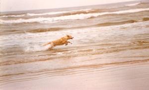Murphy Loved to Run