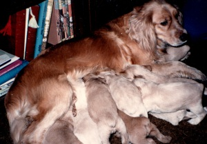 Wags with her puppies