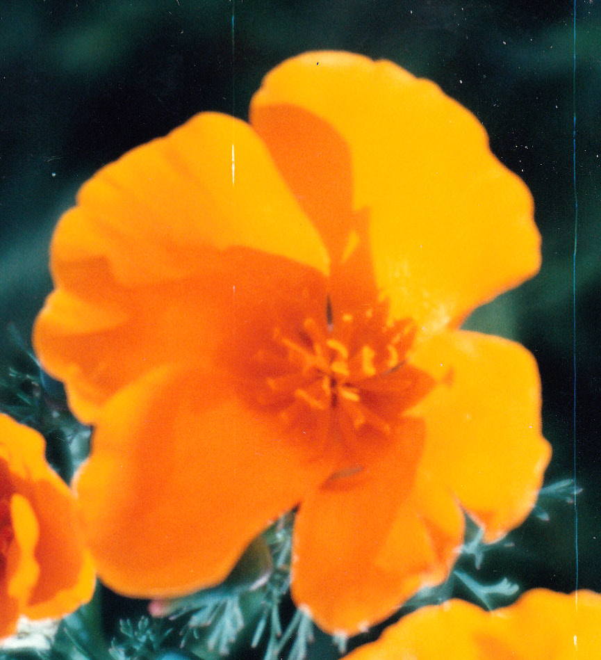 barbara kingsolver learn more every day one poppy