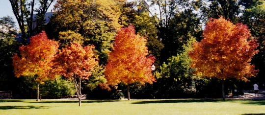 dads fall trees 3