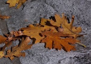 leaves again