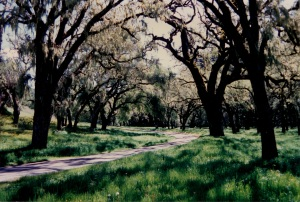 path thru oaks