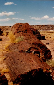 Fallen Log, Petrified Wood, Petrified Forest, AZ