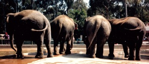 elephants four