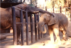 elephants mom and baby