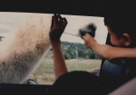 feeding llama 2