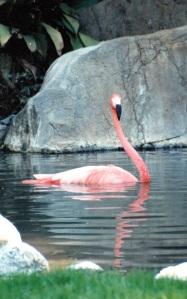 flamingo lone