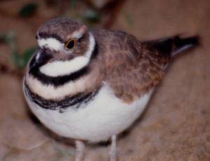 mba bird 1