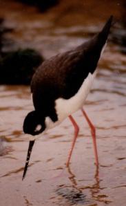 mba bird 3