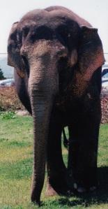 mc elephant