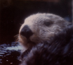 otter close