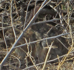 A Bunny Hiding in Plain Sight