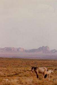 horses in NV