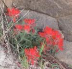 Zion & Kolob Canyons 062