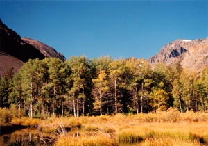 Bishop field with trees