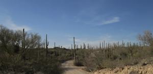 Saugaro NP Rincon & West 227
