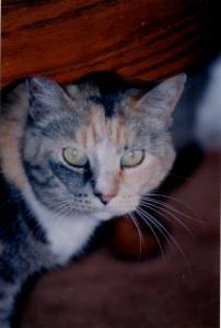 cat 4_0001