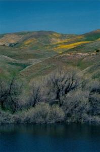 Gorman Hills