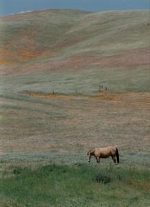 Horse in Gorman Hills