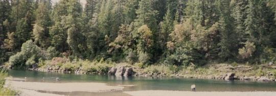 Jedediah Smith State Park 2