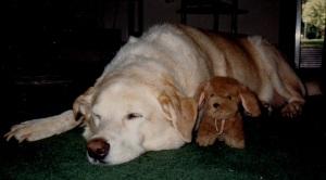 murphy and stuffed animal
