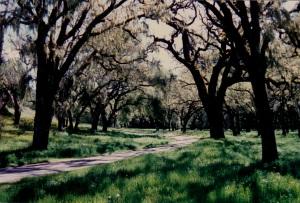 Oak Grove Carmel CA
