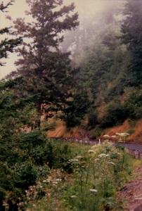 Roadside Hwy 1 Northern CA