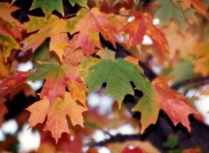 multi-leaves