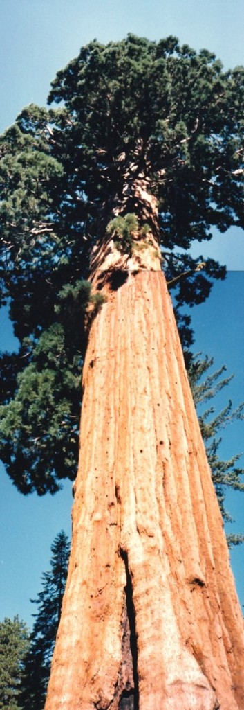 redwood up