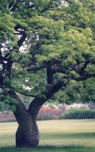 tree new growth