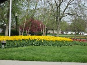 Day 2 R & R Pella Tulips 066