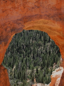 Trees through the Natural Bridge, Bryce Canyon