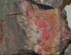 Petrified Wood Close-Up