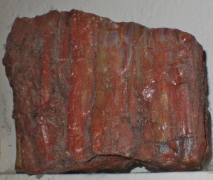 5 x 5 Petrified Wood