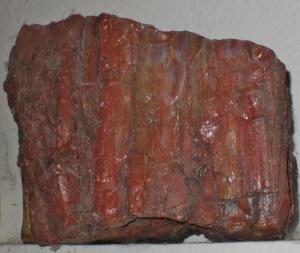 5 x 5 Petrified Wood
