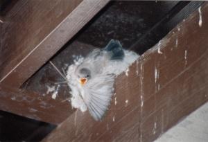 Original Angry Bird?