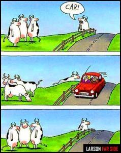 Farside-cows