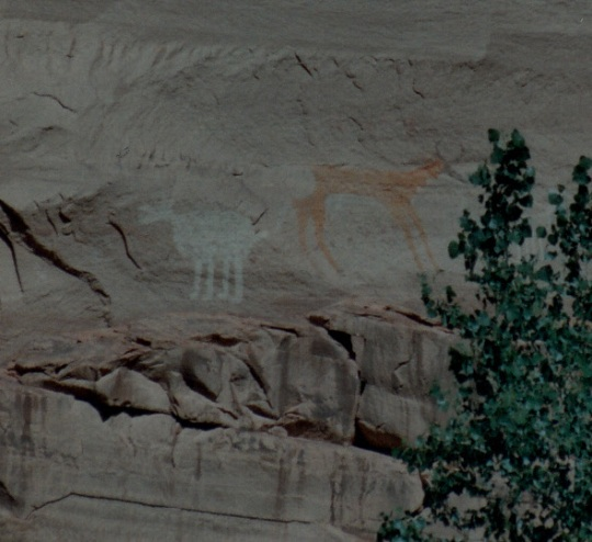 pictographs two cows