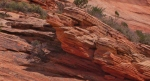 Zion & Kolob Canyons050