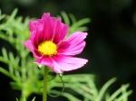 Descanso Gardens 043